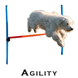 Agility-Geräte