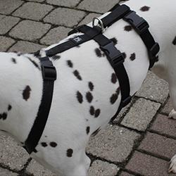 NoExit Hundegeschirre