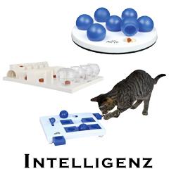Katzen Intelligenz