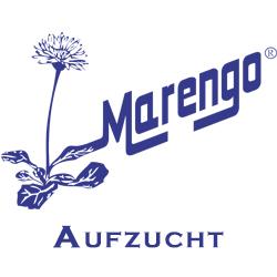 Marengo Aufzucht
