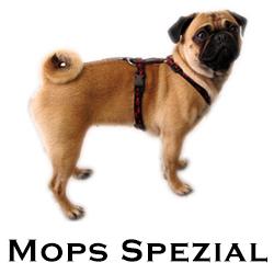 Mops Brustgeschirr Spezial