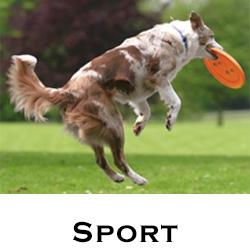 Sport & Training