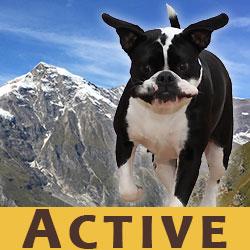 Wolfsblut Active