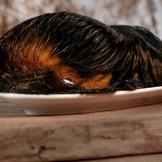 Barfgold Rinderohr mit Fell und Ohrmuschel 1 Stück