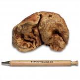 Torgas Kauwurzel - 1 Stück Größe S