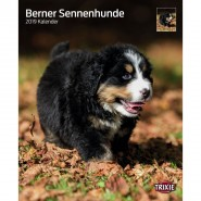 Kalender 2019 Berner Sennenhunde
