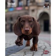 Kalender 2019 Teckel