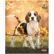 Kalender 2020 Beagle