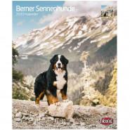 Kalender 2020 Berner Sennenhunde