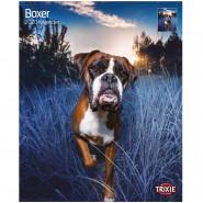Kalender 2020 Boxer