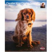 Kalender 2020 Cavalier King Charles Spaniel
