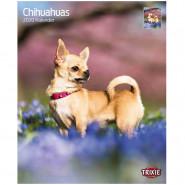 Kalender 2020 Chihuahuas
