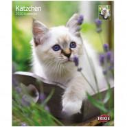 Kalender 2020 Kätzchen