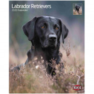 Kalender 2020 Labrador Retriever