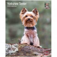 Kalender 2020 Yorkshire Terrier