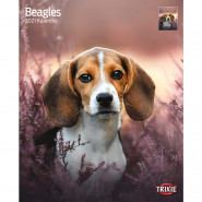 Kalender 2021 Beagles