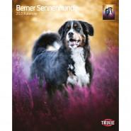 Kalender 2021 Berner Sennenhunde