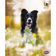 Kalender 2021 Border Collies