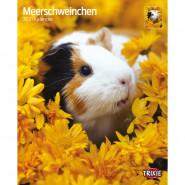 Kalender 2021 Meerschweinchen