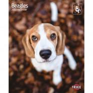 Kalender 2022 Beagles