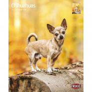 Kalender 2022 Chihuahuas