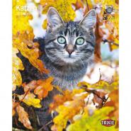 Kalender 2022 Katzen