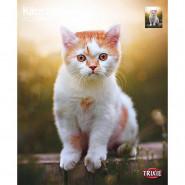 Kalender 2022 Kätzchen