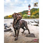 Kalender 2022 Labrador Retriever