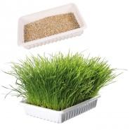 Biogras Nachfüllbeutel ca. 100g