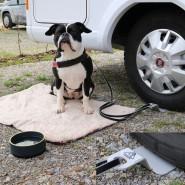 Linnepe Dog-Sitter 1 Stück