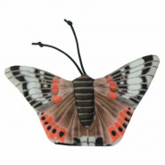 Wild Life Cat Red Admiral Butterfly (Admiral Schmetterling)