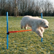 Dog Activity Agility Hürde, 123x115x3 cm, blau/orange