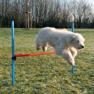 Dog Activity Agility Hürde, 123x115x3 cm, blau/orange