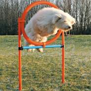 Dog Activity Agility Ring, 115x3 cm, 78 cm, orange