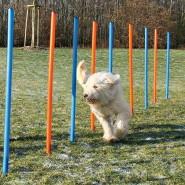Dog Activity Agility Slalom, 115x3 cm, 12St., blau/orange