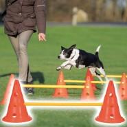 Dog Activity Hindernis Set, Kunststoff