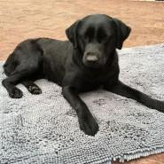 Doggy Dry Doormat