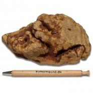 Torgas Kauwurzel - 1 Stück Größe M