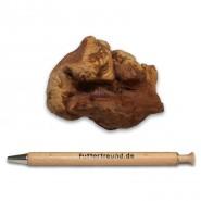 Torgas Kauwurzel - 1 Stück Größe XS